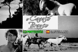 DVD O CAVALO BRANCO