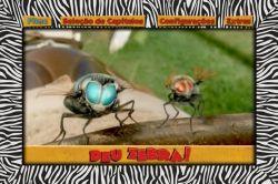 DVD DEU ZEBRA - WHOOPI GOLDBERG